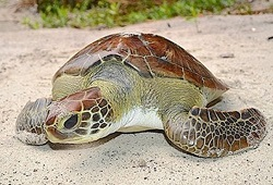 Marine Turtle Conservation Project